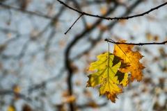 02_Herbst_Blätter